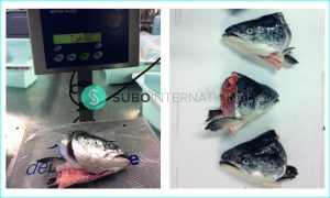 frozen salmon heads v cut - subo international